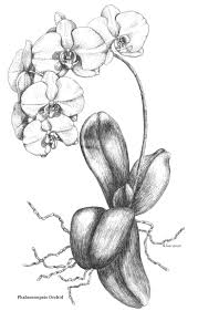 6193 best drawing images on pinterest drawings drawing and art