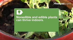how to grow a garden in your apartment youtube