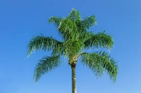 free images branch sky palm tree botany tropical plant