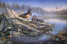 Mallard Duck Home Decor Compare Prices On Duck Poster Online Shopping Buy Low Price Duck