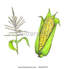 hand drawn vector illustration set corn stock vector 469794110