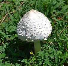 mushrooms u2013