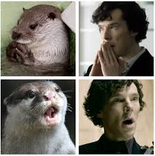 Benedict Cumberbatch Meme - benedict cumberbatch posed like an otter and punched a teddy bear