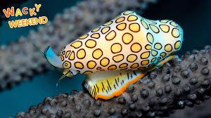 wacky weekend freaky sea creatures