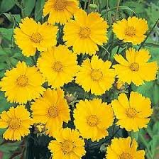 Long Blooming Annual Flowers - seeds for unusual cut flower arrangement plantss