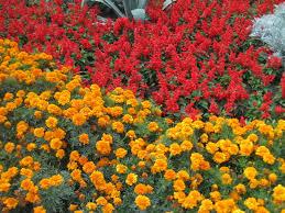 taste in flowers the blooming garden brasov transylvania idolza