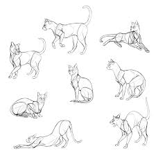 how to draw cats step by step with monika zagrobelna