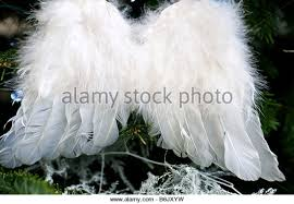 wings feathers stock photos wings feathers stock