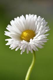 Flower Image Best 25 Flower Photos Ideas On Pinterest Flower Photography