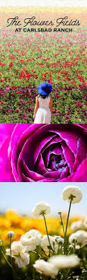 wedding flowers hshire flowers carlsbad new mexico flowers ideas