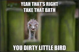 Ostrich Meme - yeah that s right take that bath you dirty little bird peeping