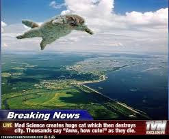 Flying Cat Meme - best of breaking news cats awesome pinterest cat meme and humor