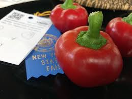 nys fair blue ribbon winners garden vegetables and their backyard