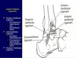 Posterior Inferior Tibiofibular Ligament Lecture Trauma Ankle Tendon
