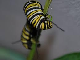 Caterpillar Vase Greenish Thumb October 2010