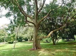 beautiful trees bc tree care