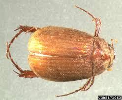 Garden Pests Identification - got pests
