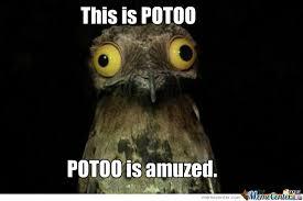 Potoo Bird Meme - potoo bird by repostmedia meme center