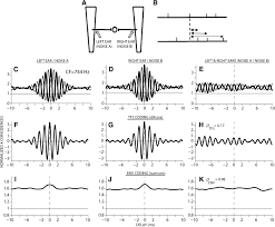 role of binaural temporal fine structure and envelope cues in