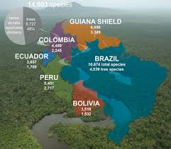 amazon basin how to count every plant in the amazon rainforest natural history