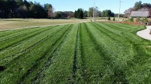 holganix testimonials holganix really works sharpe u0027s lawn