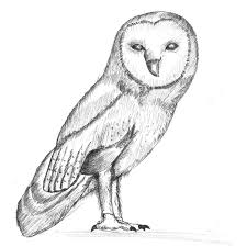 barn owl pencil drawing how to sketch barn owl using pencils