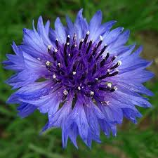 Blue And Purple Flowers Purple And Blue Flowers Flower Inspiration