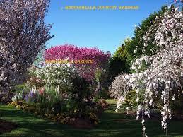australian garden flowers toowoomba carnival of flowers