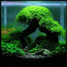 sale ornamental grasses aquarium tree fish aquarium