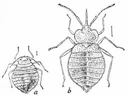 Dont Let The Bed Bugs Bite Don U0027t Let The Bed Bugs Bite Sarah Albee