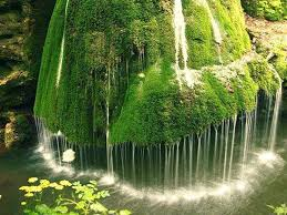 photo collection and beautiful flowers waterfalls