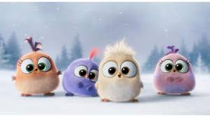 cutest angry birds movie 4k wallpaper free 4k wallpaper