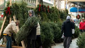 christmas tree sale christmas tree shortage is driving up prices realtor