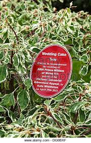 wedding cake tree wedding cake tree stock photos wedding cake tree stock images