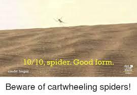 Spider Meme Misunderstood Spider Meme - misunderstood spider know your meme 100 images misunderstood