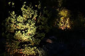 Outdoor Up Lighting For Trees Artistic Landscapes Com Blog Landscape Lights