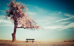 Bench Photography Aesthetic Mood Lonely Bench Hd Photography Wallpaper 15