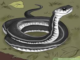 How To Snake Bathtub How To Catch A Garter Snake With Pictures Wikihow