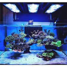 Reef Aquascape Designs Image Gallery Reef Aquascaping