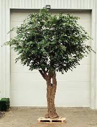 artificial tree in mumbai manufacturers and suppliers india