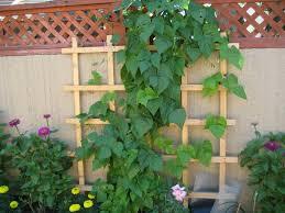 easy vertical gardening ideas for beginners dengarden f garden