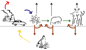 the carbon cycle biological and geological