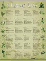herb chart healing herbs wall chart learningherbs stuff to create