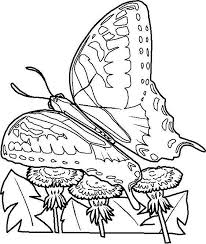 butterfly 999 coloring pages patterns coloring
