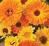 Flower Seeds Online - best 25 flower seeds online ideas only on pinterest buy weed