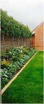 Best Trees For Backyard by Backyards Cozy 25 Best Ideas About Landscaping Trees On