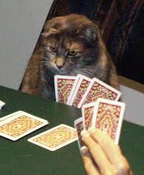 cats agatha cards