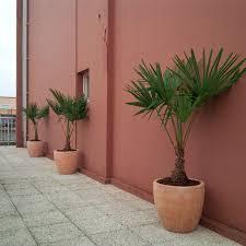 amenagement terrasse paris paysagiste d u0027intérieur d plantes fr