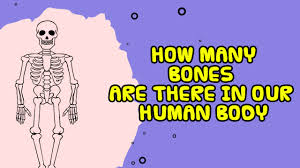 Anatomy Of Human Body Bones How Many Bones Are There In Human Body Kids Video Show Youtube