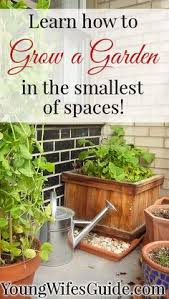 how to create the perfect vegetable garden on a patio vegetable